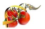 Tecnología de alimentos para una mejor nutrición