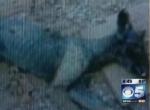 Una mujer en Texas afirma que fue mordida por el chupacabras