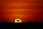 El Serengeti en camino a la ruina