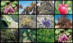 Especies de plantas en peligro