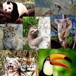 La extinción es una amenaza para los vertebrados