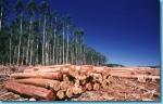 Brasil pone en venta zonas de la Selva Amazónica