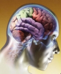 Algunos alimentos saludables para el cerebro