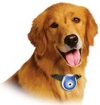 Una cámara digital para tu mascota