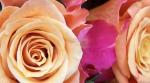 Como se clasifican las rosas
