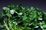 Conoce mas del Berro, una planta aromática