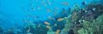 El bioma marino