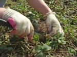 Aspectos importantes en el cuidado de las plantas