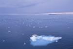 ¿Cuál es el efecto del calentamiento global?