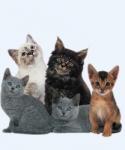 Eventos felinos: el parto