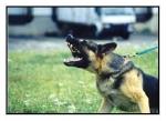 """Les llaman Perros Potencialmente Peligrosos, aunque sus dueños son los """"Realmente Peligrosos"""""""