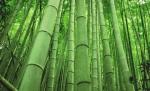 Lenceria de bambú hecha a mano