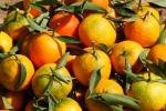 La historia de la Mandarina