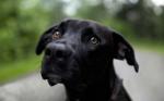Aprendan como educar a un perro paso a paso