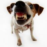 Mi perro es agresivo como puedo educarlo