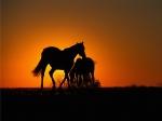 El caballo en su historia