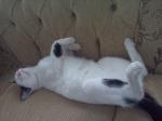 El Gato Un simpático animal de mascota