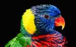 Hay cosas que no conocemos de las aves