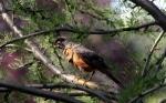 El hábitat de los pájaros