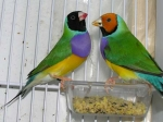 Las Aves y su relación con el hombre