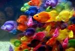Especificaciones de los peces