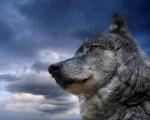 Los Perros y su historia