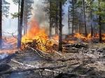 La conservación de los bosques y su problemática
