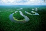 Los métodos de conservación forestal