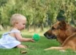 Mascotas: Compañeros de Vida