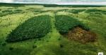 Huella ecológica y desarrollo sostenible, claves en el futuro de nuestro planeta