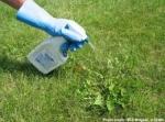 Fertilizante para plantas ¿Natural o artificial?
