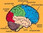 La diabetes tipo 2 – y su relación para Prevenir la Enfermedad de Alzheimer