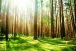 Beneficios de los árboles en las ciudades  | Ecolimpio