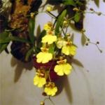 Abono de las orquídeas