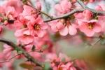 Llega una nueva estación: La primavera