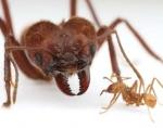 Sobre las hormigas