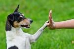 Guia para entrenar a tu perro para hacer sus necesidades en el lugar escogido