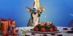 ¿Cómo se puede calcular la edad de los perros?