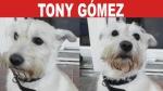 Tony Gómez: Un Perrito Criollo adoptado durante unas vacaciones | Tu Mascota TV