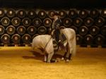 Coreografías flamencas más espectaculares con caballos