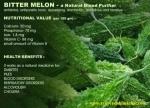 SECRETOS DE SALUD DE calabaza amarga (melón amargo o karela)