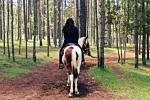 Historia de la equitación
