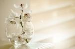 ¿Cómo saber qué tipo de flor regalar según la ocasión?