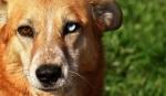 El color de los ojos de un cachorro
