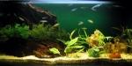 Cómo elegir un pez sano para nuestro acuario