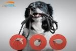 Pulgas y Garrapatas: 5 productos para controlarlas
