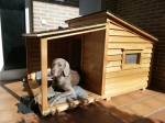 Algunos consejos para colocar casas para perros