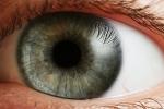 Ojo humano función y características