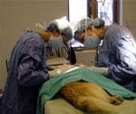 Estudiar veterinaria